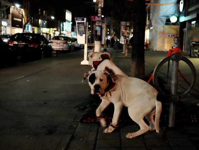 doggies, queen street west, toronto