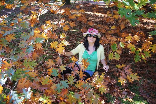 Mount Wilson - autumn leaves