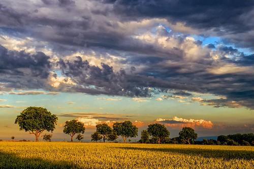 summer tree clouds germany landscape deutschland cloudy sommer feld felder wolken landschaft gewitter baum wolkig sturm niedersachsen barsinghausen barrigsen