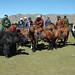 Yak en la meseta de Mongolia