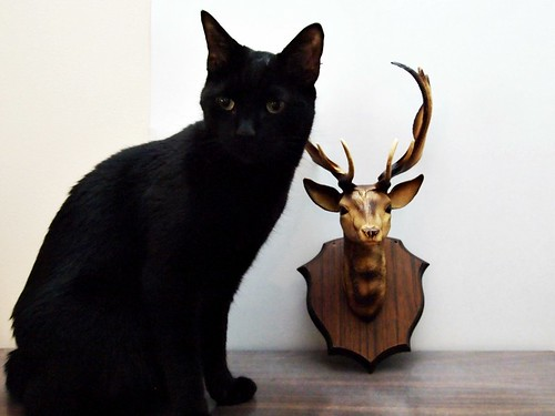 Buttercup & a deer head