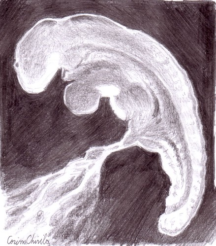 Embrion desenat in creion - Embryo pencil drawing