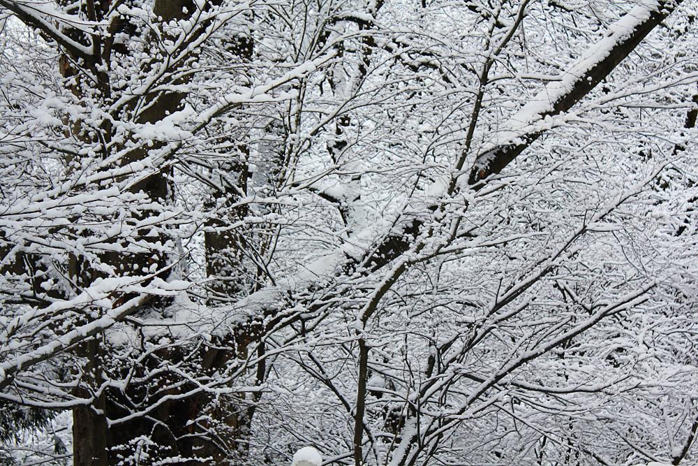 降りたての雪