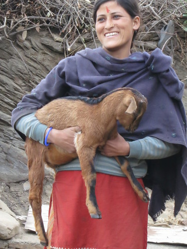 Goat keeper getting her master's degree in Hindi literature in India's northern state of Uttarakhand