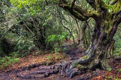 La Gomera - Parque Nacional de Garajonay (2)