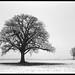 Snowy Fields in Hancock County by mat4226