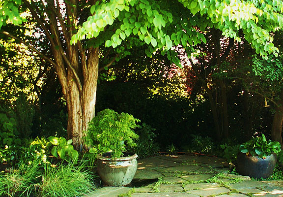 This deciduous tree offers the right amount of summer shade.