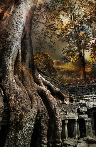 tree texture ancient ruins asia cambodia angkorwat abigfave magicunicornverybest