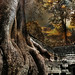 Angkor Wat Tree by D'ArcyG -- Thanks! 350,000 views!