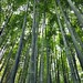 Arashiyama 嵐山 - 03
