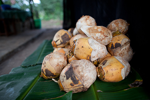 Coconuts at UWAMWIMA farm