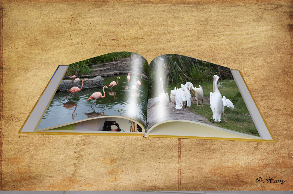 Libro de aves !