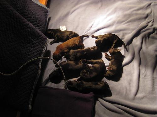 2012 03 07 Banyan's litter 003