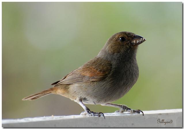 Petit oiseau des jardins l 39 un de nos rendez vous quotidie flickr photo sharing - Natagora oiseaux de nos jardins ...