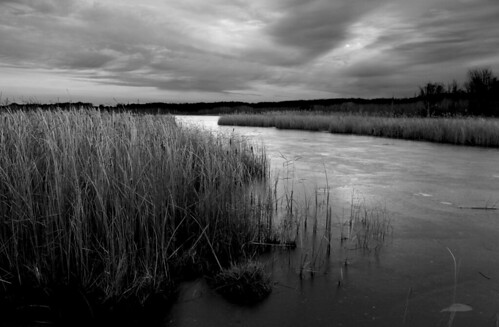 winter blackandwhite ice clouds pond mendon grasses