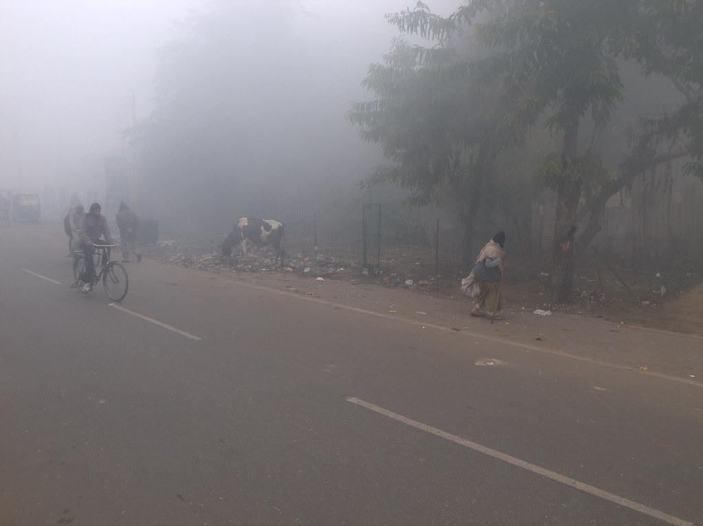 Agra Fog