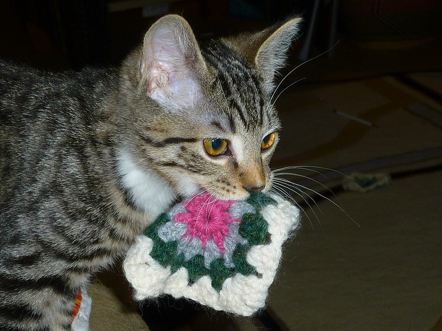 Otis stalks the granny square