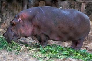 See the wildlife of Bujumbura at Rusizi Park - Things to do in Bujumbura