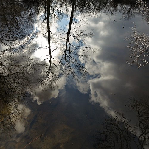 Reflection in Pine Swamp