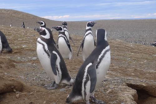 Punta Arenas-112