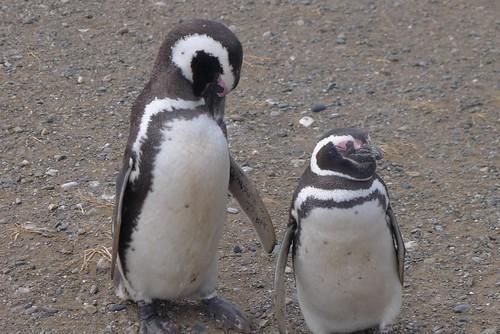 Punta Arenas-126