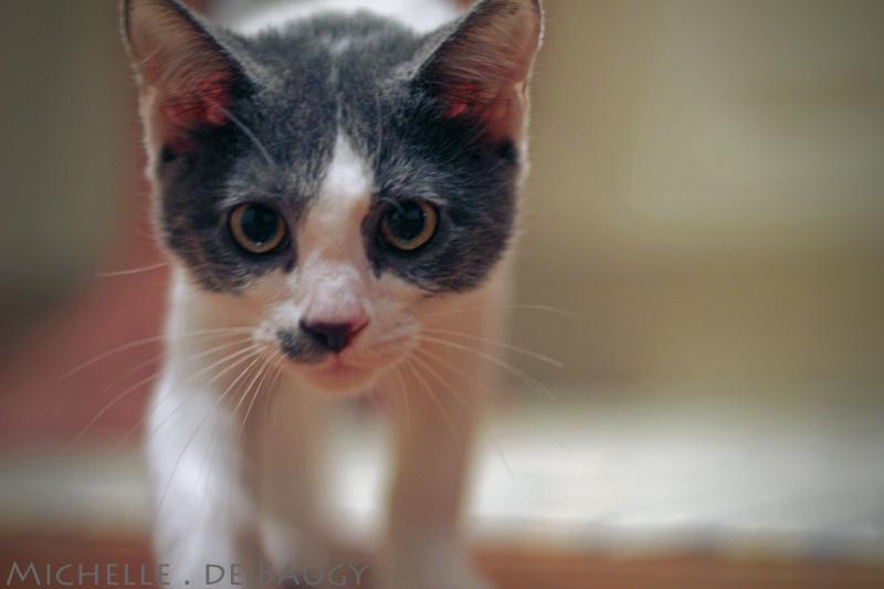 kittenblog005