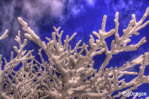 樹氷HDR