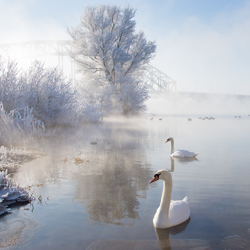 Icy Swan Lake by Edwin van Nuil Photography