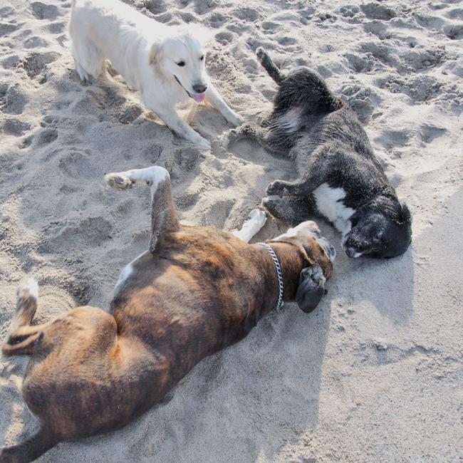hundkompisar busar på stranden