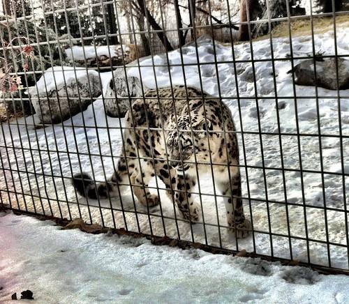 20120219 calgary zoo - 16