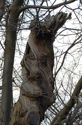 Benevolent tree face