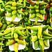 Pepper time! Etla market. #oaxaca #Mexico #foodie
