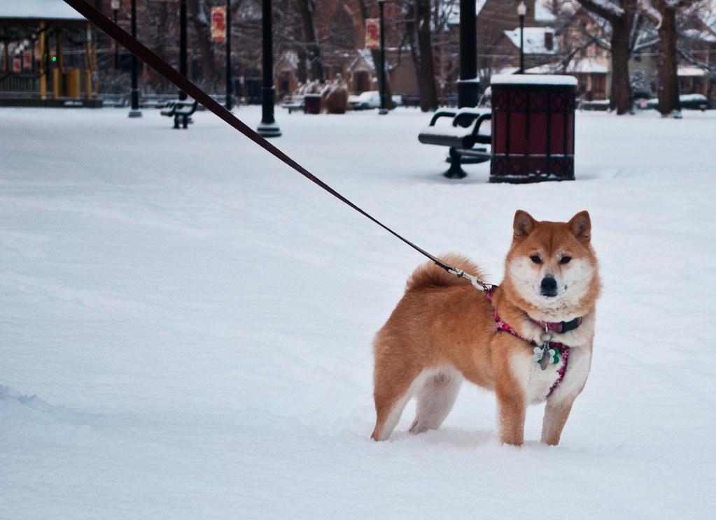 365-237 Akemi Snowpark