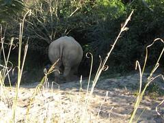 Rhino on Kiliminjaro