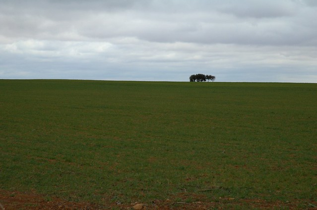 64/366: Campos de Castilla