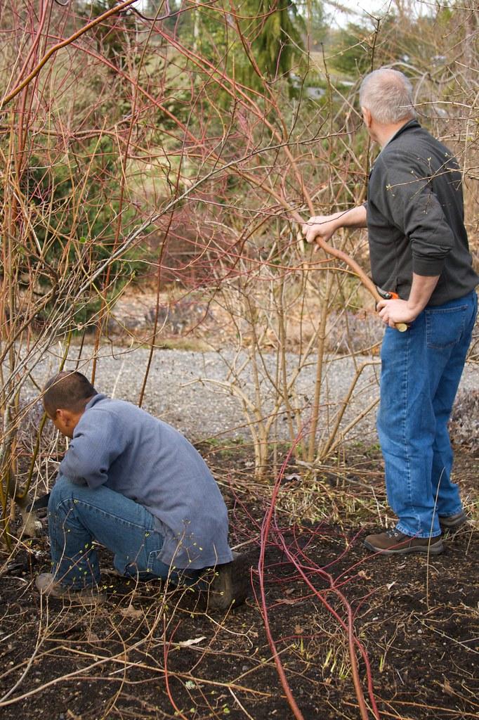 pruning  1277