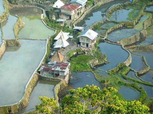 Luzon-Batad (50)
