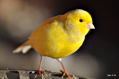 Captive Birds