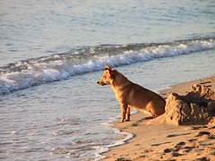Dog-on-the-Beach-at-Sunrise__64858