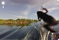 Spot a critter while cruising down the Amazon river.