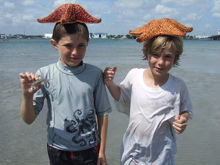 starfish heads