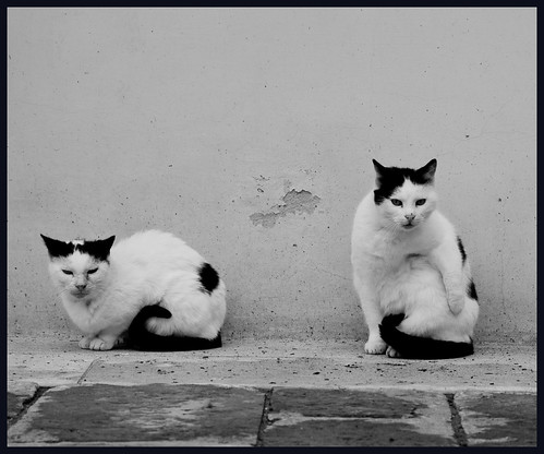Cats by hans van egdom