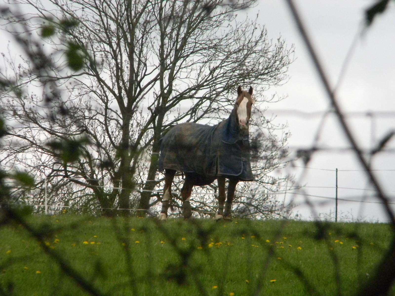 Watchful horse Wendover Circular via Lee