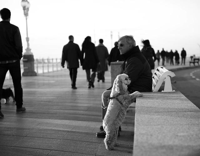 Compañeros de paseo
