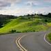 The Road, Bolinas Ridge, Mt. Tamalpais by Della Huff Photography