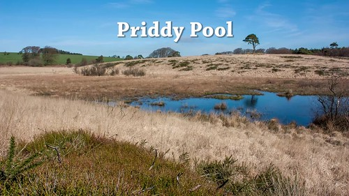 Priddy pool