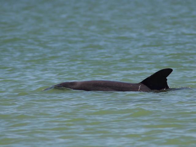 Dolphin 20130423