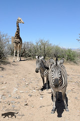Out of Africa Wildlife Park 04-12-14