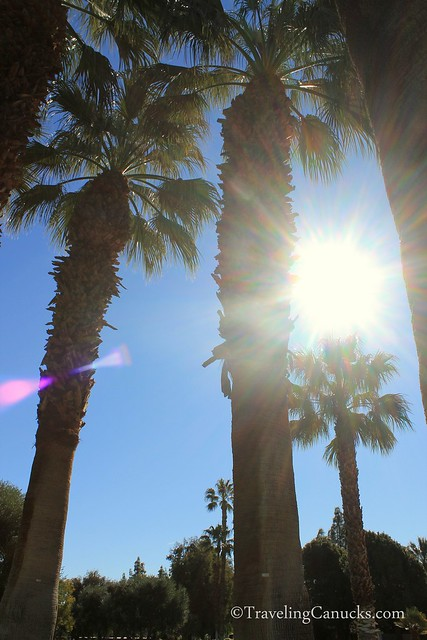 Palm trees and morning sun