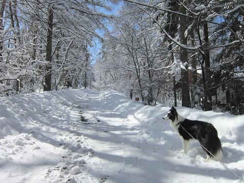 雪化粧の散歩道 2012年3月11日10:06 by Poran111